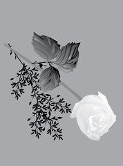 white rose on grey