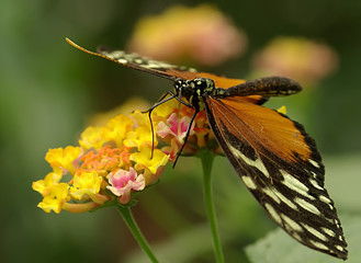 Prächtiger Schmetterling