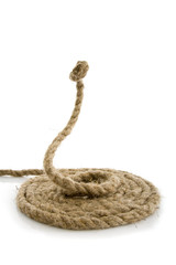 snake from rope on white