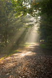 Sunbeams in autumn forest poster
