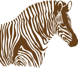 Brown and white Zebra on white background