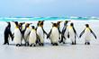 Quadro Kings of the Beach