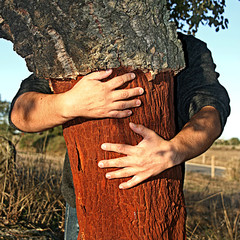 holding a cork tree
