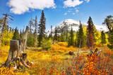 Brilliant colors of autumn poster