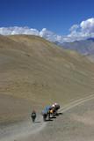 Ladakh - La caravane au col - 1 poster