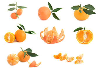 Different cultivars of tangerines isolated on white background