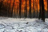 snow and sundown poster