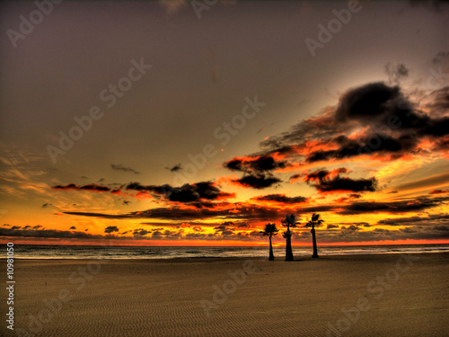 Canet Plage Sunrise, Palm Tree, Full Frame