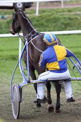 jockey jaune et bleu