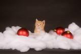 Yellow kitten in fluffy snow poster
