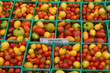 Organic Yellow and Red Cherry Tomatoes at Farmers Market