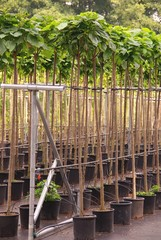A plant and tree nursery