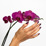 Fototapety Beautiful hand touching orchid