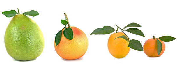 Pamelo, tangerines, grapefruits and oranges isolated on white ba