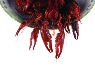 cangrejo de rio