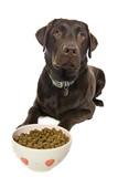 Dog Awaiting His Food poster