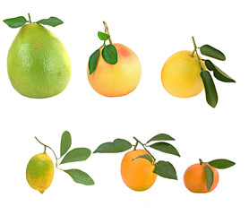 Pamelo, tangerines, grapefruits and orange isolated on white bac