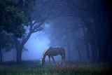White Horse in Blue Mist