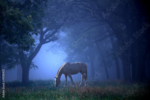 White Horse in Blue Mist