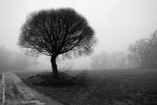 Tree silhouettes on a foggy day in december