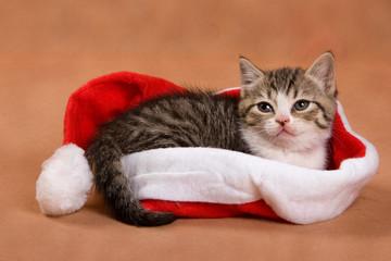 Little kitten in red hat