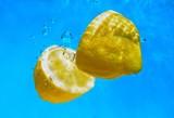 podwodne cytryny-