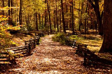 Fenced Path Through Autumn Woods
