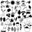 collection of difference plant vector