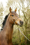 beautiful young stallion portrait poster