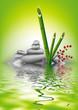 bambou reflet 05