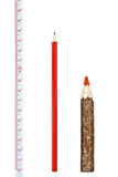 Red thick and thin pencils with ruler isloated on white poster