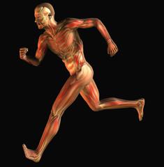 muscoli 6