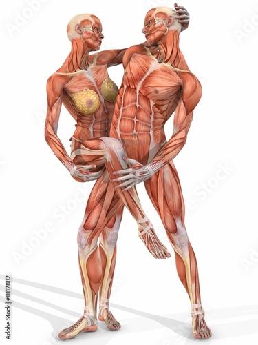 GamesAgeddon - Muskelaufbau eines weiblichen und männlichen Körpers ...