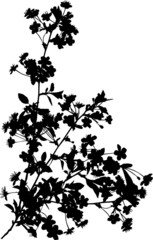 four black cherry tree branches