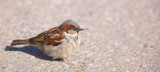 A telephoto of a small sparrow in early sunset