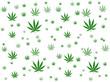 Feuilles de Cannabis sur fond blanc