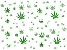 Cannabis leaf op witte achtergrond