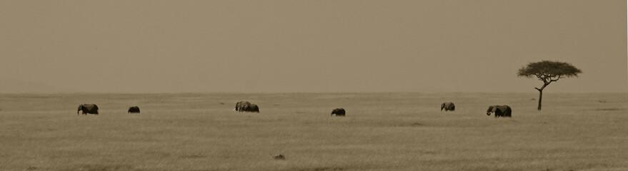 African elephant landscape, Masai Mara, Kenya