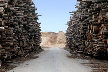 Holzvorrat für Biomassekraftwerk