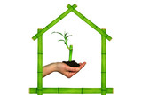 green house sheltering a young bamboo poster