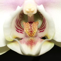 Orchidee_Close-up