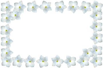 cadre de frangipanier blanc