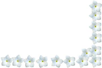 demi-cadre de fleurs blanches de frangipaniers
