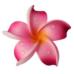 fleur rose de frangipinier