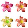 teintes de fleurs de frangipanier