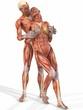 Muskelaufbau eines weiblichen und männlichen Körpers