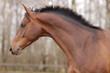 horse moving portrait