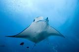 Fototapeta nikotyny - ocean - Pejzaż podwodny
