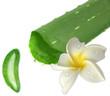 aloe vera et fleur de frangipanier