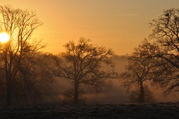 lumière du jour dans les arbres en hiver